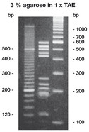 Agarose High Resolution, 100 g
